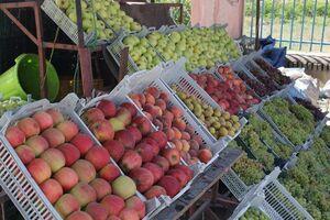 میوههای نوبر پاییز به بازار رسیدند
