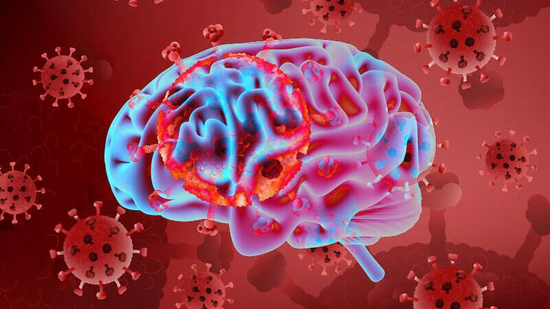 تاثیر کروناویروس بر بافت مغز و حافظه