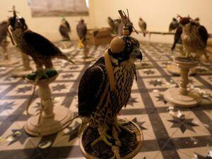 عکس/ کشف محموله قاچاق پرنده شکاری