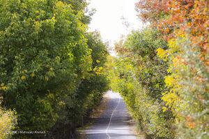 عکس/ طبیعت پاییزی ارسباران