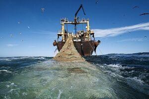 ممنوعیت دوساله صید «ترال»