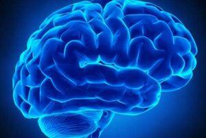 تاثیر روابط اجتماعی بر ماده خاکستری مغز