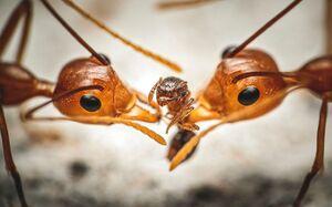 برترین تصاویر «حشرات» در سال۲۰۲۰