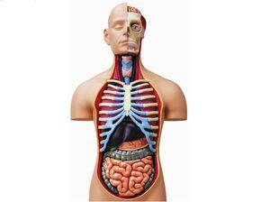 کشف یک عضو جدید و مفید در بدن انسان!