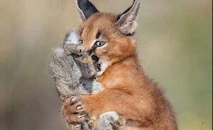 عکس/ لحظه شکار گربه سیاهگوش