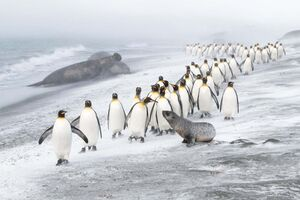 برترین تصاویر حیات وحش اروپا در سال۲۰۲۰