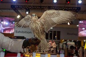 فروش پرنده ایرانی یک و نیم میلیارد تومانی در قطر+ فیلم و عکس