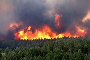 عکس/ آتش سوزی گسترده در کلرادو