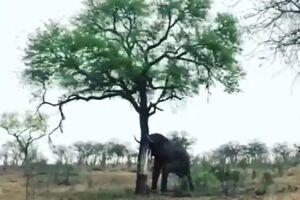 فیلم/ قدرت واقعی یک فیل
