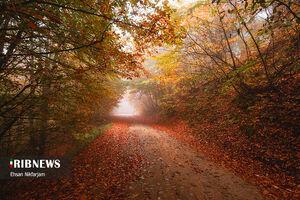 عکس/ پاییز هزار رنگ شهسوار