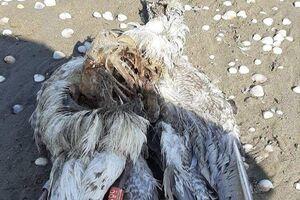پرندگانی که هرگز به وطنِ خود باز نمیگردند!