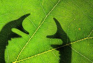 عکس/ برندگان مسابقه عکاسی از حشرات