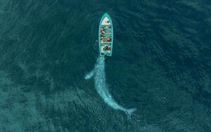 تصویر هوایی از یک نهنگ در یک قدمی قایق گردشگری