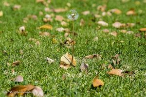 عکس/ برگریزان پاییز