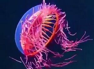 فیلم/  شگفتی خارق العاده خلقت در دل دریا