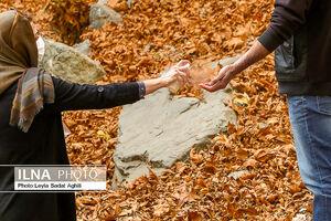 پاییز کرونایی، زیبا و پر خطر