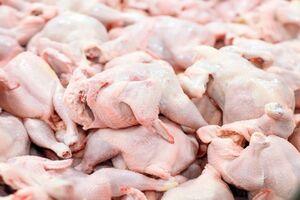 بازار مرغ به ثبات رسید