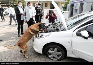 کشف مواد مخدر توسط سگ های مواد یاب پلیس