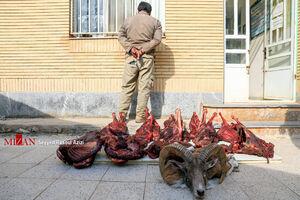 عکس/ بازداشت شکارچی غیرمجاز در کلات