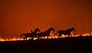 این آتش سوزی جنگلهای آمریکا نیست+عکس
