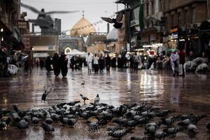 عکس/ بارش رحمت الهی در نجف
