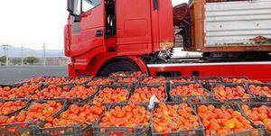 فیلم/ گوجه سر مزرعه ۵۰۰ تومان، گوجه مغازه ۲۳ هزار تومان