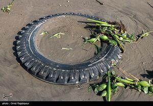 ساحل خزر در محاصره گیاه مهاجم سنبل آبی