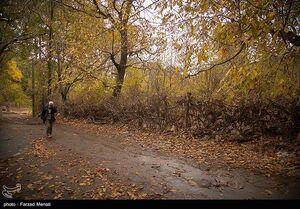 عکس/ پاییز هزار رنگ در کرمانشاه