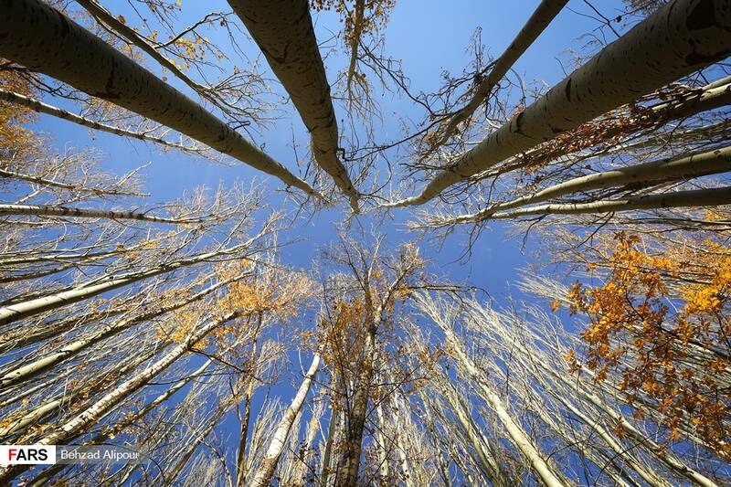 پاییز کوچهباغهای همدان
