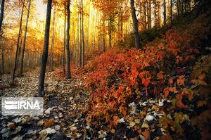 پاییز رنگارنگ همدان