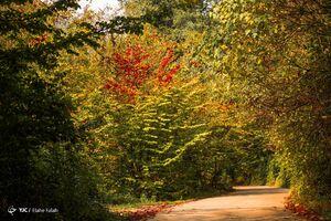عکس/ پاییز جنگل دیلمان در گیلان