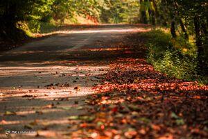 جاده زیبای سیاهکل به دیلمان+فیلم