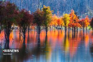 عکس/ پاییز زیبای دریاچه الندان ساری