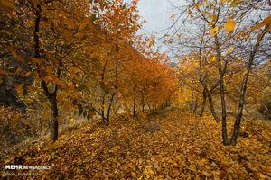 عکس/ طبیعت پاییزی دامنه های الموت
