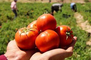 از زیان دو ماه گذشته کشاورزان تا قیمت بالای امروز