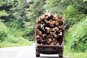 قاچاق درختان جنگلی با پراید