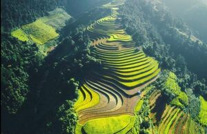 زمین های زراعی در ویتنام