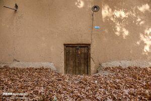 عکس/ پاییز زیبا در کوچههای کاهگلی یزد