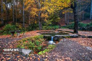 طبیعت بی نظیر پاییزی جنگل راش مازندران