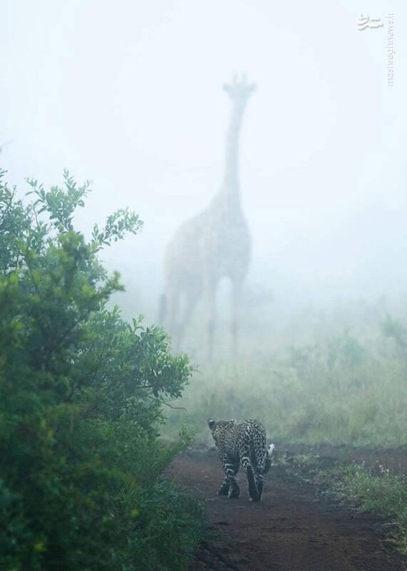 2983839 - تصویری بینظیر از حیات وحش آفریقا