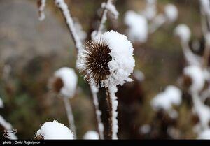 برف پاییزی در ارتفاعات رودسر