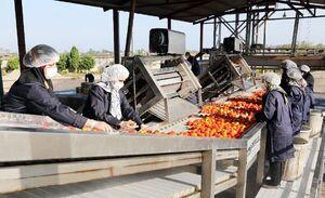 راهاندازی نخستین اورژانس محصولات کشاورزی به همت بنیاد برکت