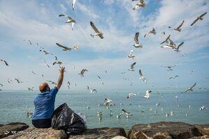 عکس/ بازگشت شالوها به خلیج فارس