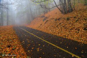 پاییز جنگل هیرکانی