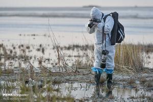 خطر شیوع آنفلوانزای فوق حاد پرندگان