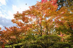 عکس/ پاییز زیبای ژاپن
