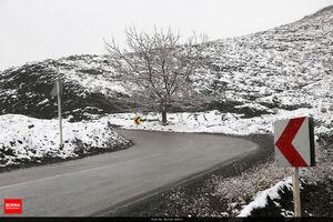 عکس/ شکستن درختان نقده به دلیل بارش برف
