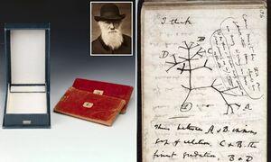 کتابهای میلیون دلاری داروین گم شدند! +عکس