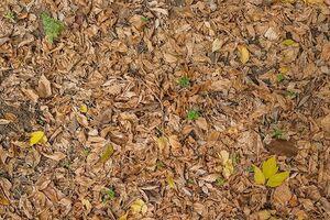 برگهای پاییزی پاییز نمایه