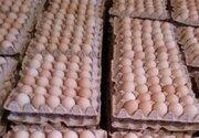 ریشه افزایش قیمت تخم مرغ چیست؟